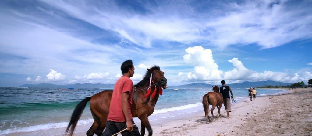 sumbawa chevaux plage