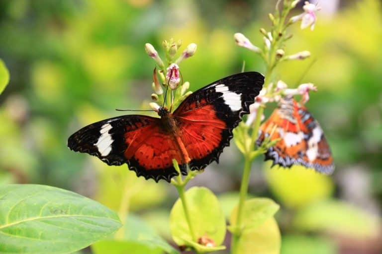 temoignage avis bali authentique papillons