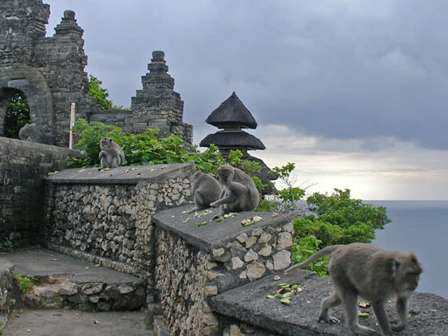 temple uluwatu singes falaise mer vegetation