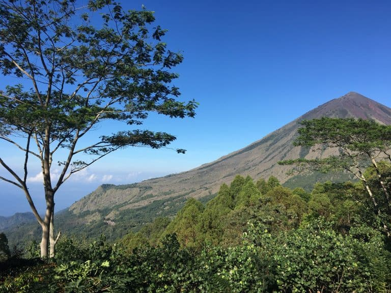 testimonial Florest montagne pano