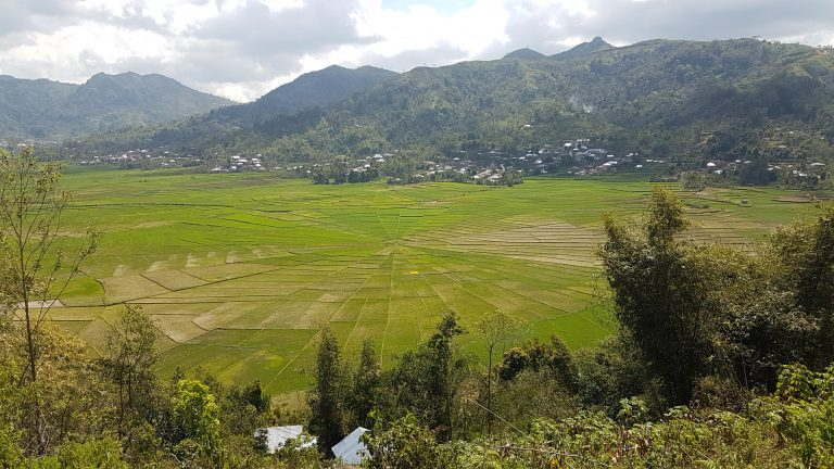 testimonial Florest rice field pano
