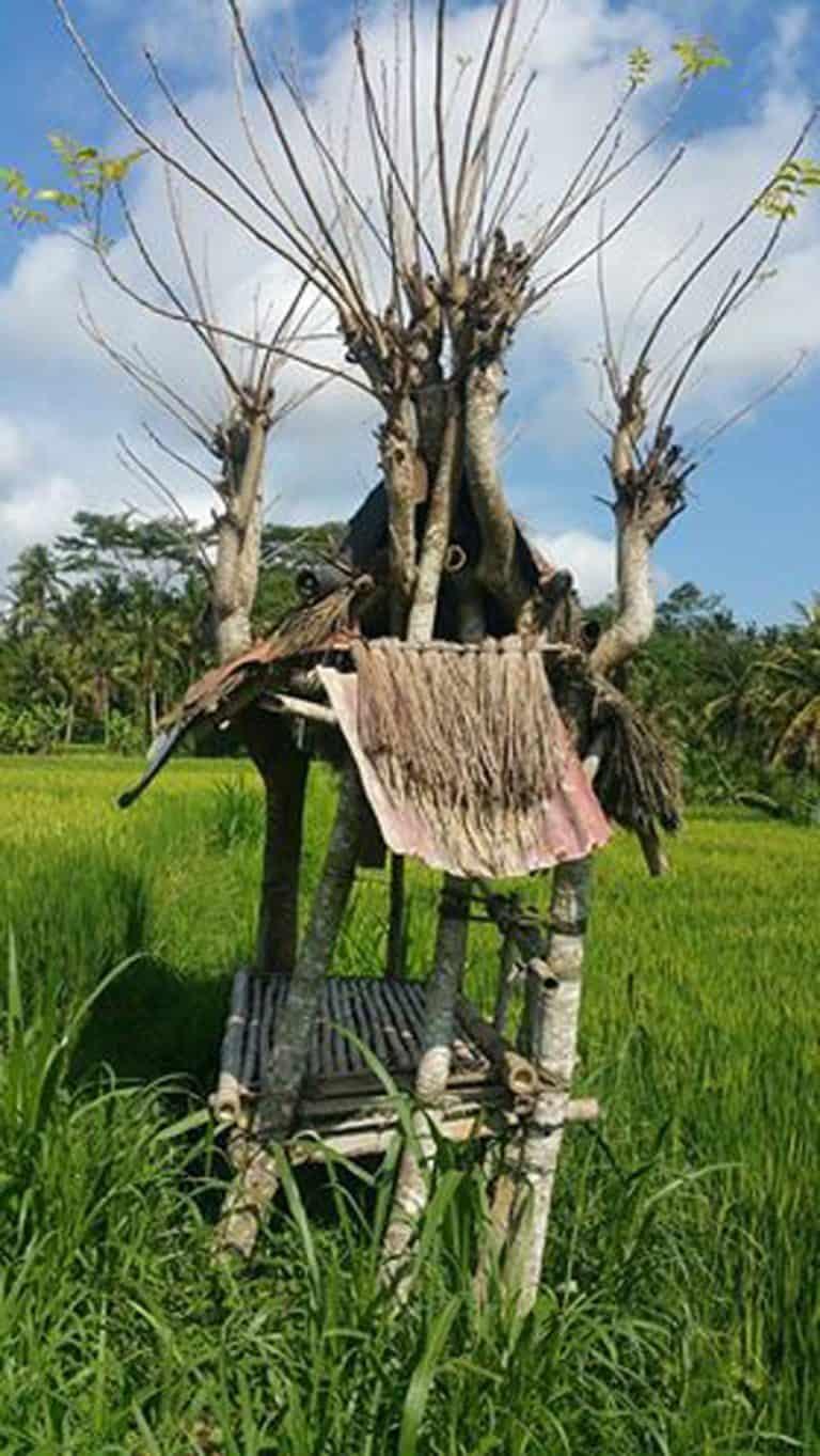 testimonial rice field Bali