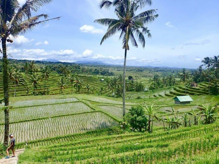 riziere bali