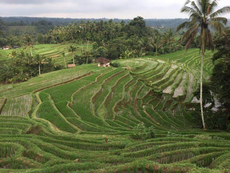 testimonial ricefields Bali