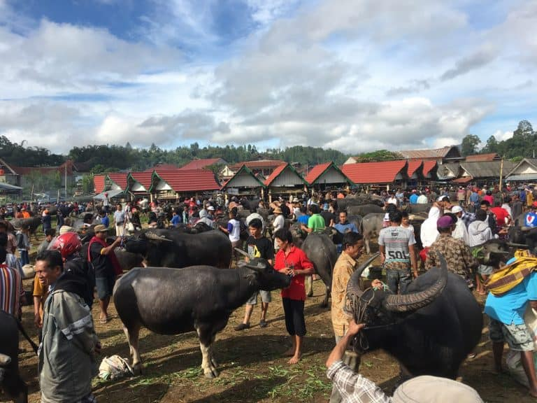 testimonial Sulawesi toraja marchés d'animaux traditionnels
