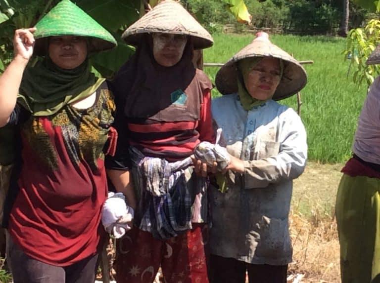 testimony-tradition-ricefield-lombok-sumbawa