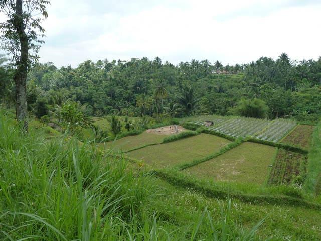 tetebatu ile lombok indonesie paysage rizieres