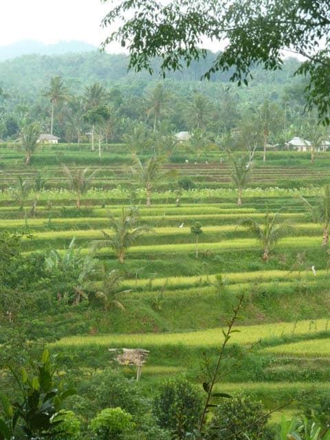 tetebatu ile lombok indonesie rizieres balade campagne rizieres