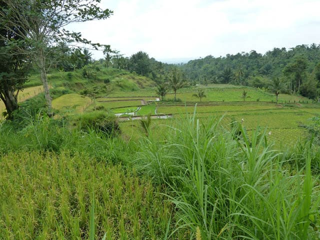 tetebatu ile lombok indonesie rizieres en cascades