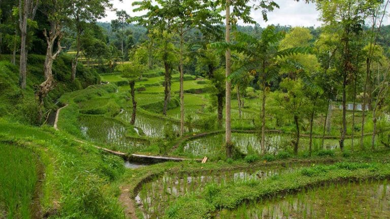 tetebatu ile lombok indonesie rizieres panorama