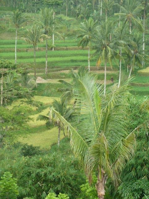 tetebatu ile lombok indonesie rizieres trekking