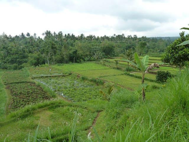 tetebatu ile lombok indonesie rizieres