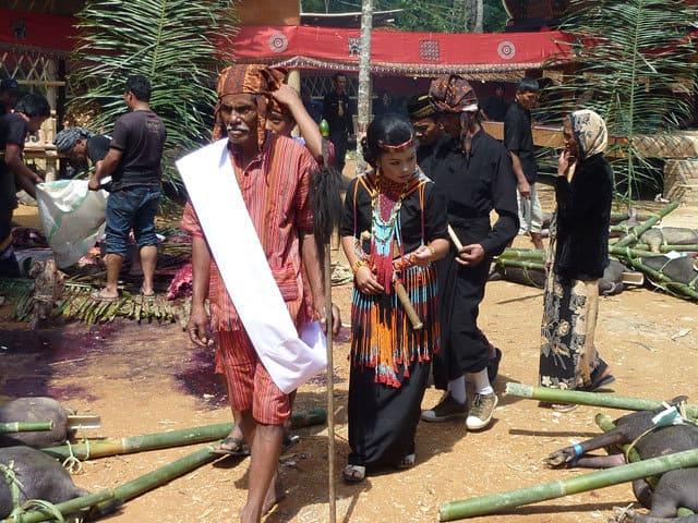 sulawesi toraja ceremonie funeraille sacrifices animaux