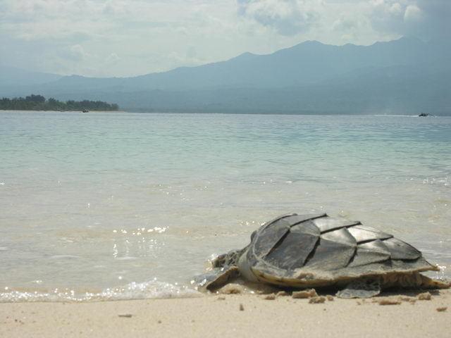 tortue de mer gili meno ile lombok eau transparente
