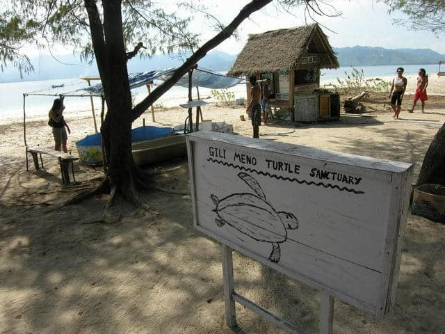 tortue de mer gili meno ile lombok indonesie
