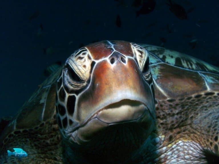 tortue de mer gili meno ile lombok panorama