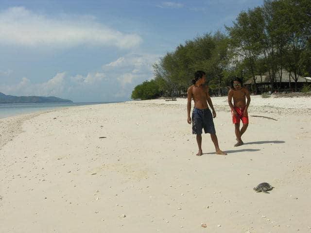 tortue de mer gili meno ile lombok plage paradisiaque
