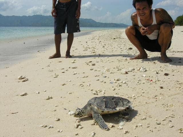 tortue de mer gili meno ile lombok sable blanc