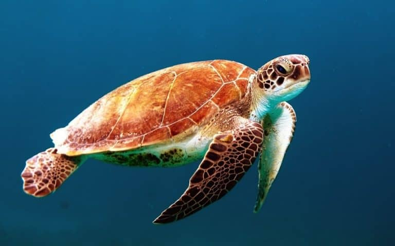tortue gili islands indonesie fonds marins