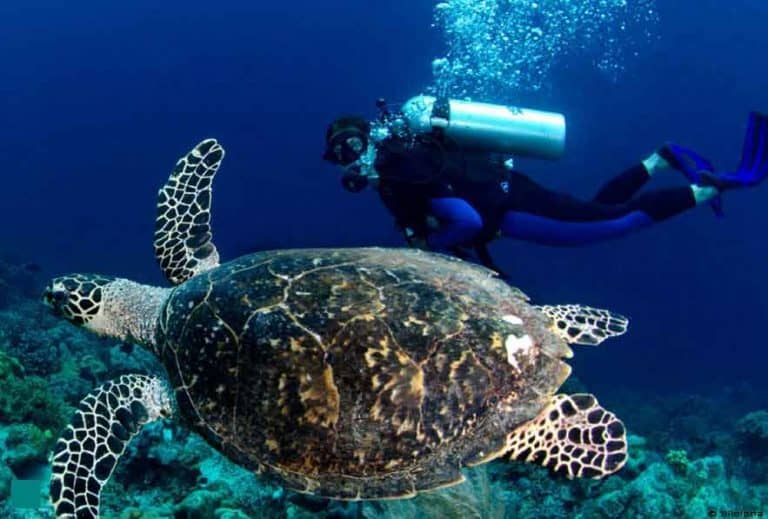 tortue indonesie decouverte faune