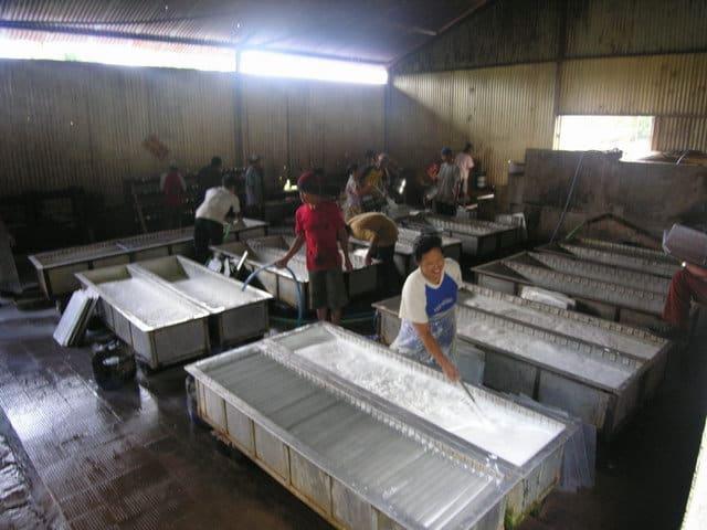 travailleurs ferme de caoutchouc java