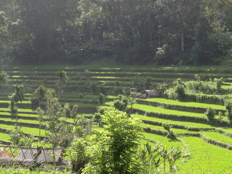 excursion dans les rizières balinaises