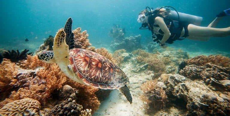 tortue plongée Gili