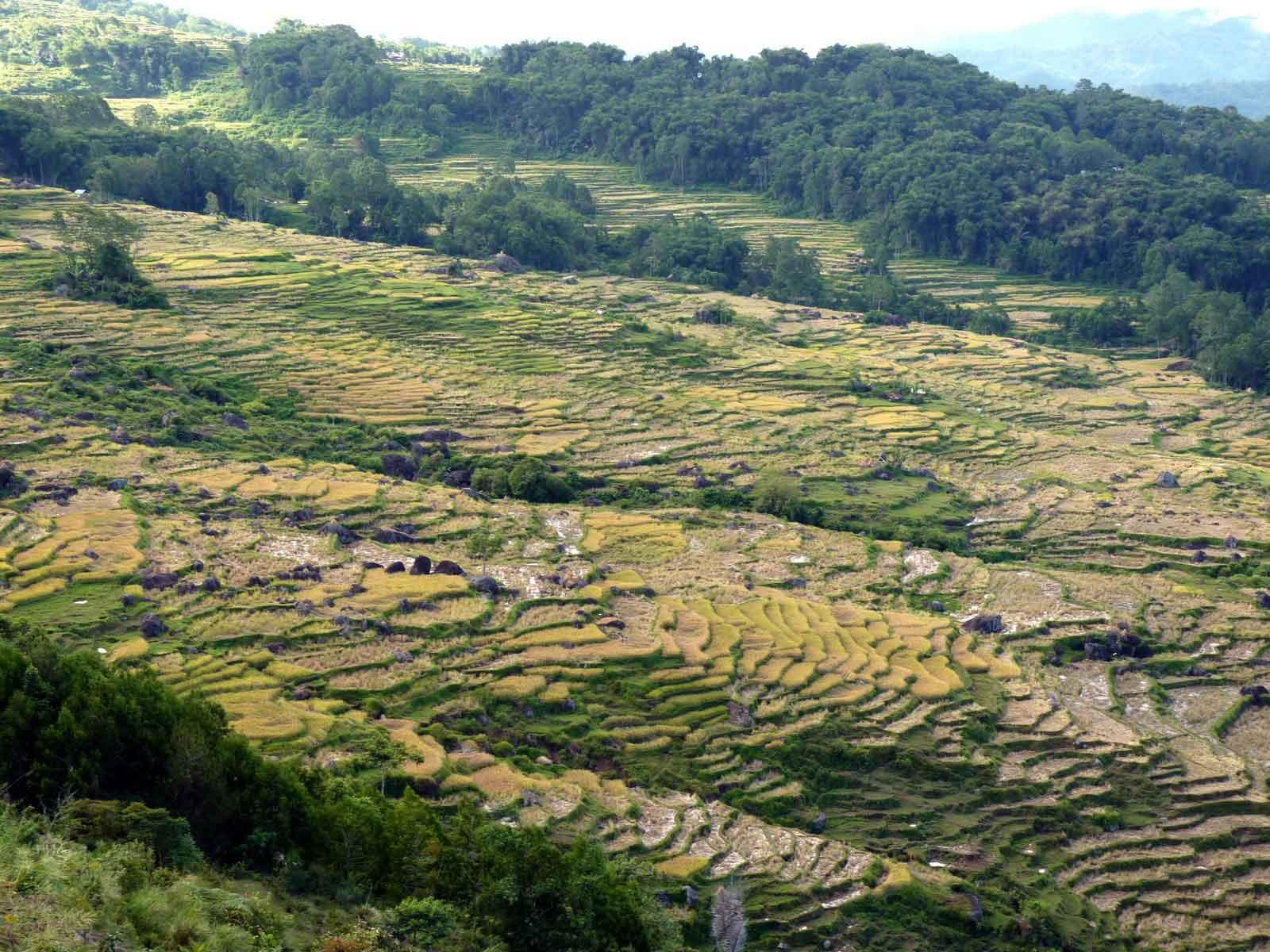 vie rurale toraja sulawesi indonesie panorama