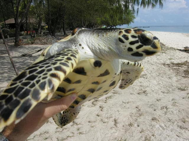 voir tortue de mer gili meno ile lombok