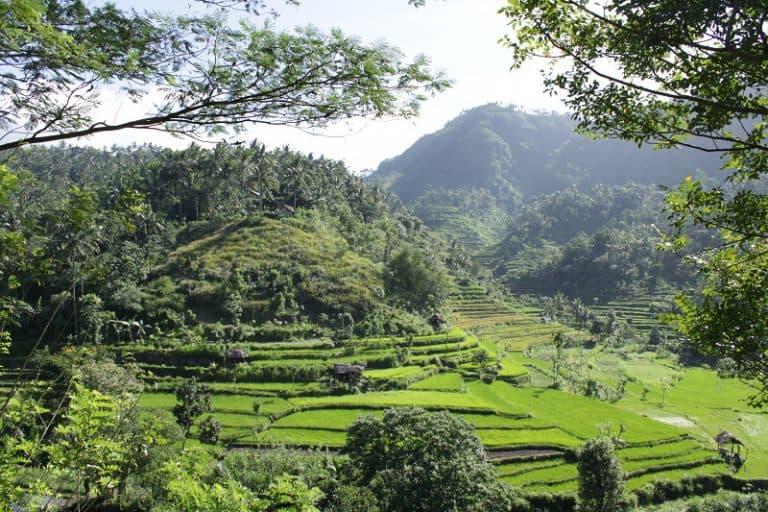 vue panoramique rizières balinaises